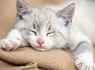可爱懒睡的小猫摄影图片