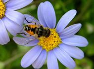 春天花园勤劳的小蜜蜂图片精选