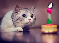 逗趣萌猫咪图片 开心欢乐时光
