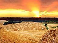 草原上丰收的草卷自然风光高清图片
