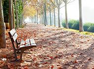 秋天落叶自然风景伤感意境图片