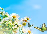 精选唯美漂亮的蝴蝶风景图片