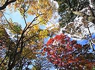 日本神户六甲山初秋迷人自然风景
