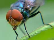 小昆虫苍蝇高清图片
