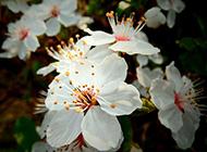 花蕾植物微距风景壁纸