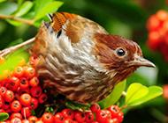 春天鸟类图片可爱机灵