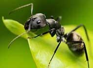 热带雨林细小蚂蚁高清桌面壁纸