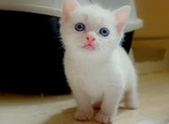 萌猫咪图片可爱壁纸精选