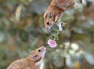 囧图片之老鼠求爱