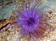 颜色斑斓好看的小海葵图片