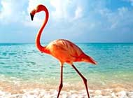 美丽鸟世界的温馨