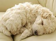 小型萌宠狗狗动物图片
