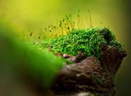 绿色唯美小清新风景图片壁纸
