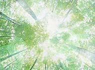 清新宜人的夏天绿色植物高清图片