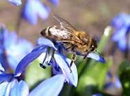 蜜蜂与花桌面高清壁纸