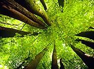 四季唯美浪漫森林风景高清美图