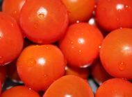 新鲜蔬果番茄图片