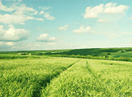 绿色草地风景图片壁纸优美怡人
