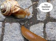 卖了房子的蜗牛