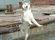 特搞笑动物图片之狗狗的水上芭蕾