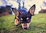 超级呆萌可爱的小狗狗图片