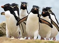 可爱企鹅狗狗等动物图片合集