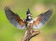飞鸟走兽自然界动物恣意飞翔美景