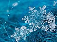 唯美晶莹剔透的雪花高清壁纸