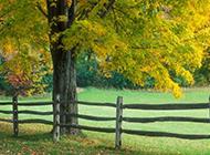 好看的秋天风景图片大全