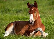 斑点狗骏马高清动物组图