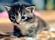 超萌超可爱的猫星人