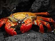 沙滩上横行无忌的螃蟹高清图集