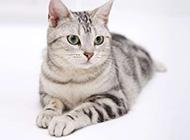 可爱小猫咪高清桌面壁纸
