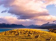 新西兰清新雅致风景图片壁纸推荐