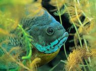 颜色鲜艳形状各异的鱼类海洋生物