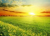 绿色植物风景图片壁纸高清护眼