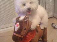 二货狗狗搞笑图片之我的小毛驴