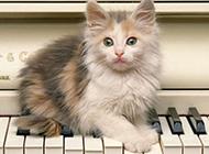 慵懒猫咪发现镜头后目不转睛