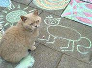 爆笑猫咪不爽表情图片