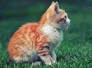 古灵精怪的萌猫动物桌面壁纸