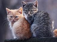 顽皮搞怪的小猫咪可爱壁纸图片