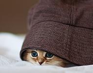 萌萌哒的小猫咪卖萌高清图片