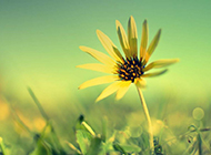 植物风景唯美图片壁纸集锦