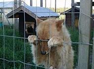 二货狗搞笑图片之我是冤枉的