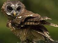 猫头鹰栖息枝头精致自然风景壁纸