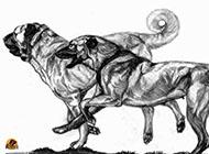 坎高犬精美手绘素描图片