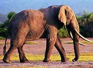 精选大象高清图片