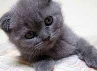胖乎乎的可爱猫咪高清桌面壁纸