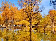 秋天树林风景金黄如画卷