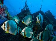 超清海底世界风景图片欣赏